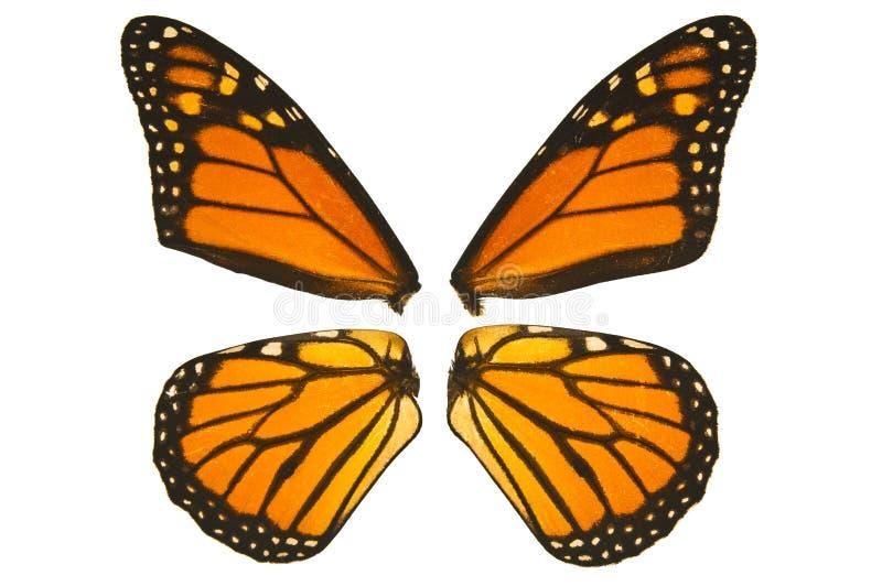 De vlindervleugels van de monarch stock foto's