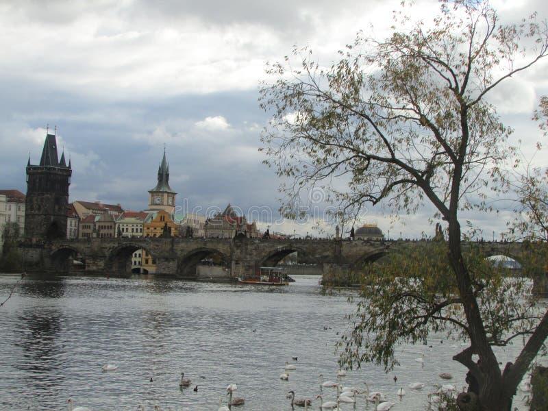 De Vltava-Rivier en middeleeuws Charles Bridge met torens en standbeelden, Praag, Tsjechische Republiek stock foto's