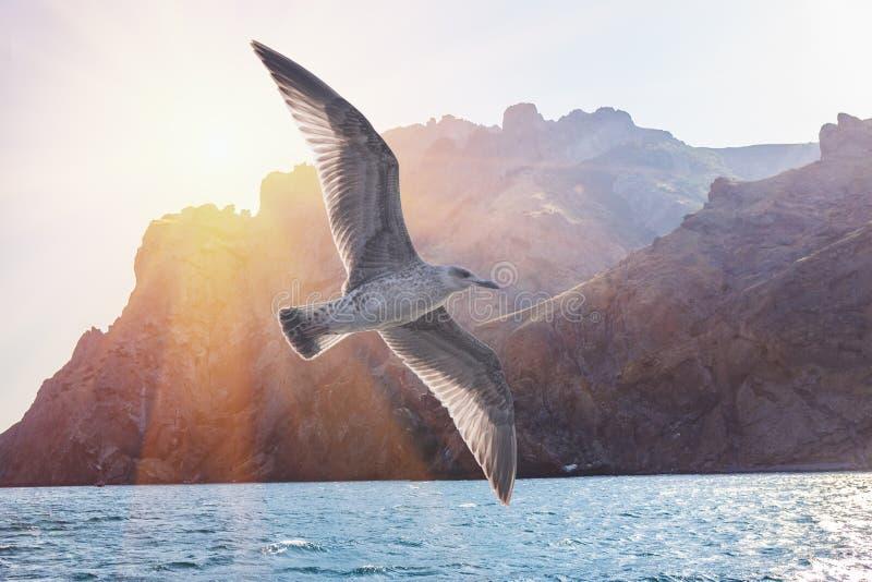 De vlucht van de albatrosvogel in zonnige hemel op rand van rotsen royalty-vrije stock foto