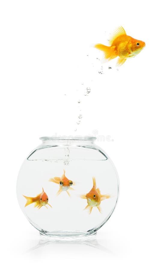 De Vlucht van de goudvis stock foto's