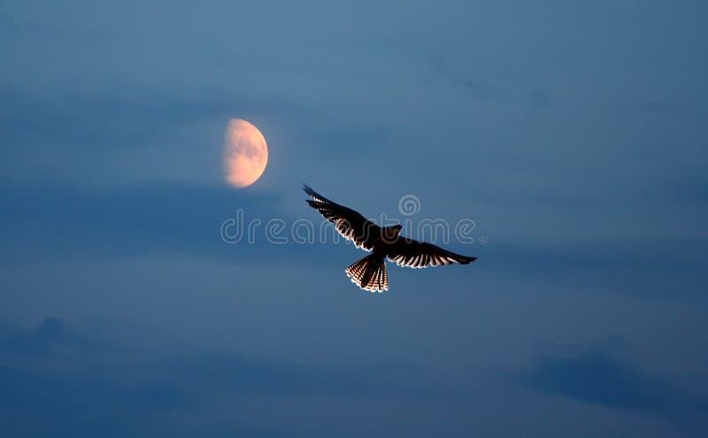 De Vlucht van de nacht royalty-vrije stock foto