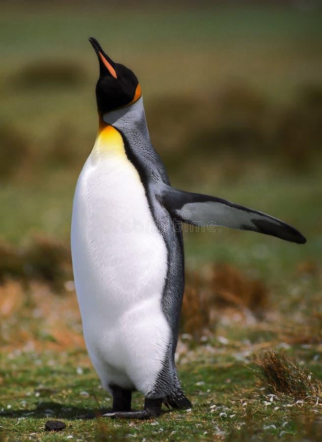 De vlucht van de pinguïn royalty-vrije stock afbeeldingen