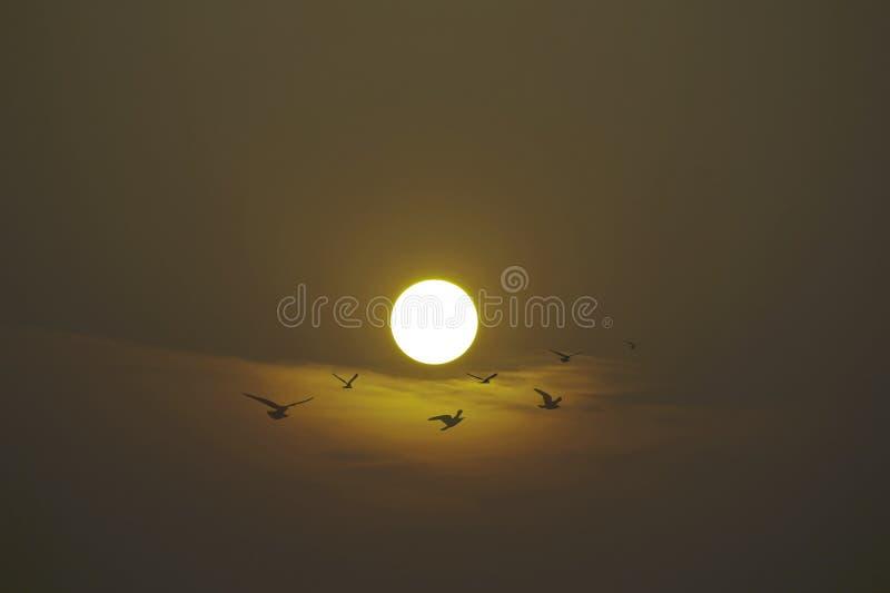 De vlucht van vogels tegen de achtergrond van de het plaatsen zon royalty-vrije stock foto