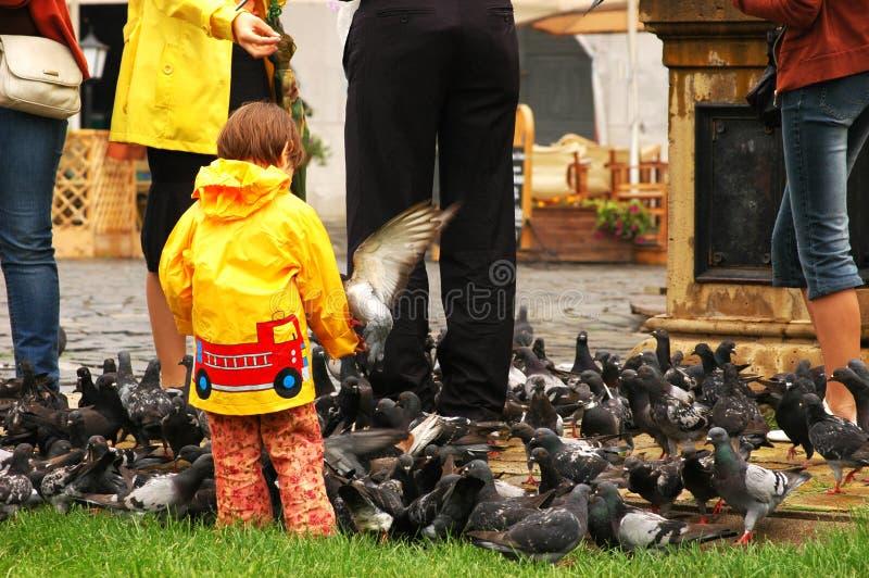De voedende duiven van het meisje stock afbeelding