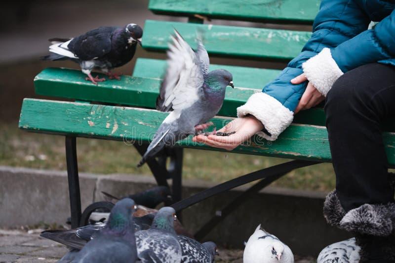 De voedende duiven van het meisje stock foto's