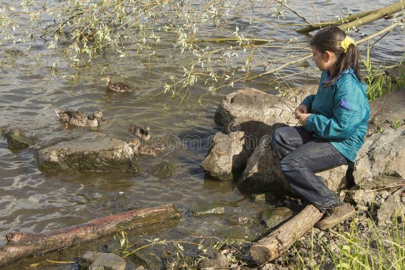 De voedende eenden van het meisje stock foto