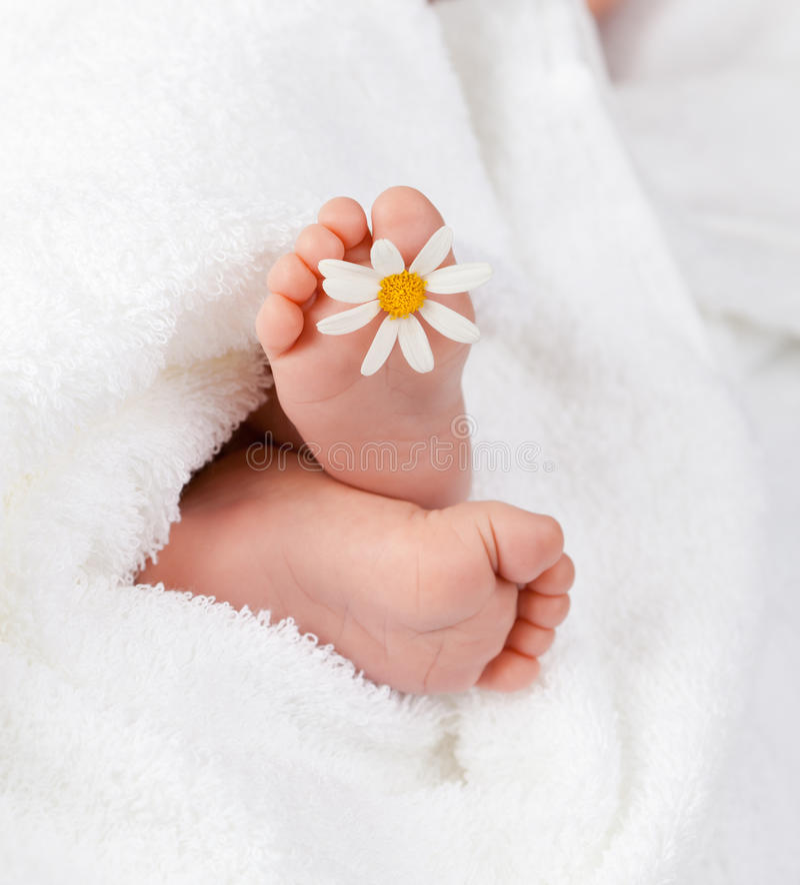 De voet van de zuigeling met weinig margriet royalty-vrije stock afbeelding