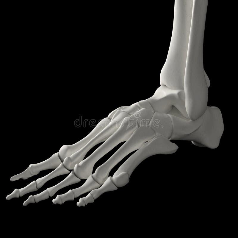 De voet van het skelet stock illustratie