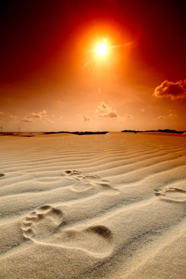 De voetafdruk van de woestijn stock foto
