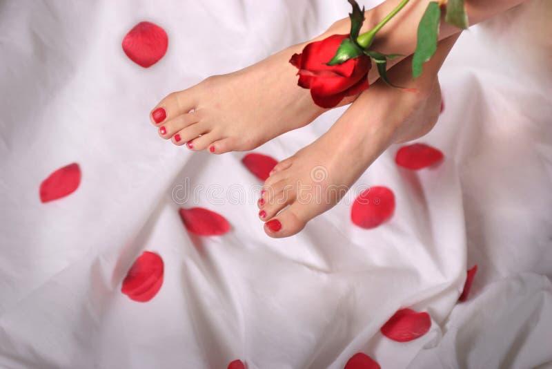 De voeten en Rood namen toe royalty-vrije stock fotografie