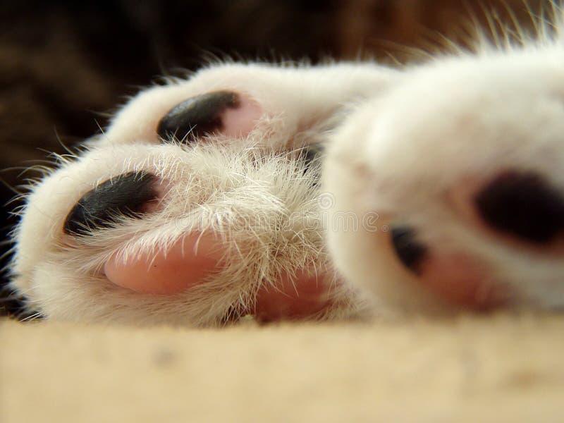 De voeten van katten royalty-vrije stock afbeeldingen