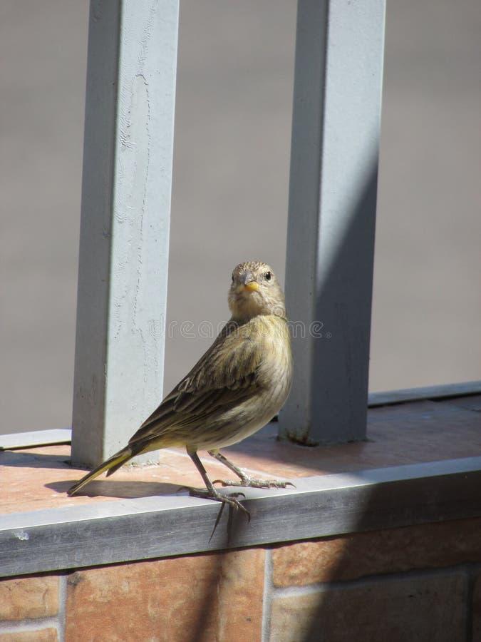 de vogel royalty-vrije stock afbeelding
