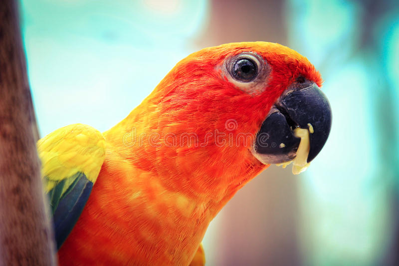 de vogel stock foto's