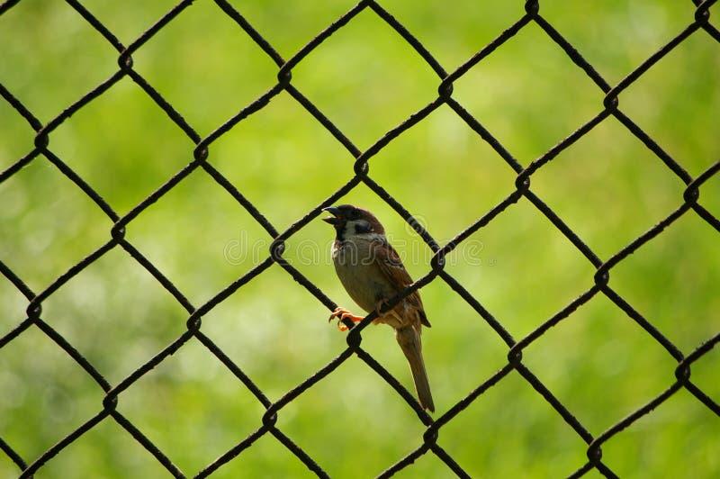 de vogel stock fotografie