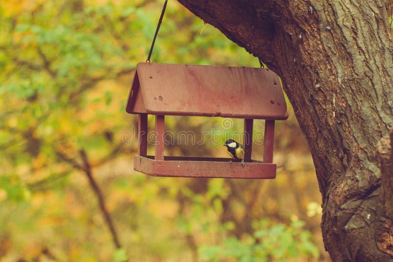 De vogel is aangekomen en in de vogelvoeder gezeten stock fotografie