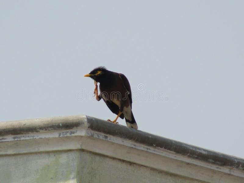 De vogel is bevindende hoogten op het dak van het huis royalty-vrije stock fotografie