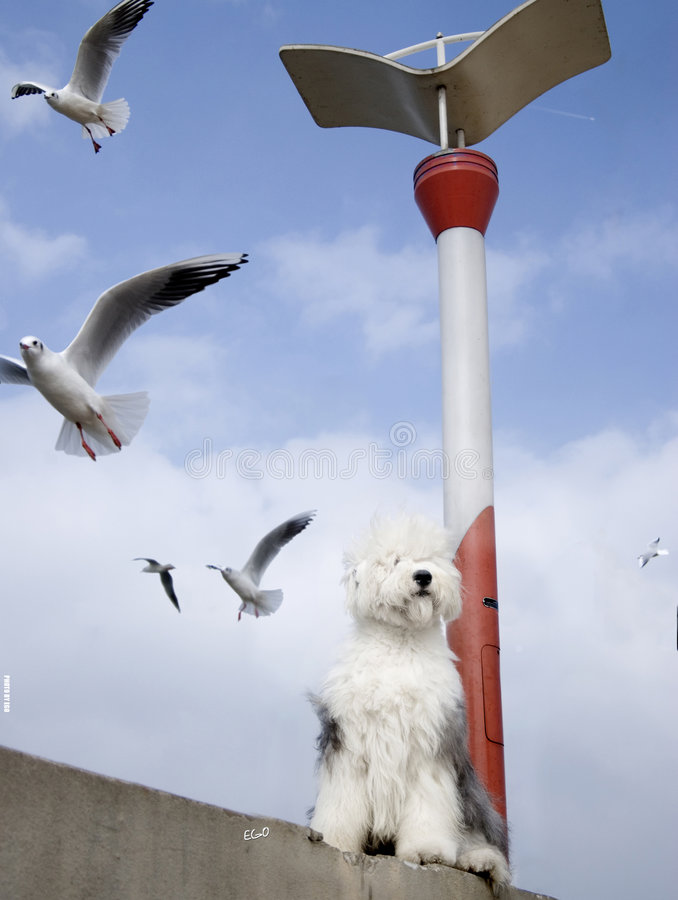 De vogel en de hond van de zeemeeuw stock afbeelding