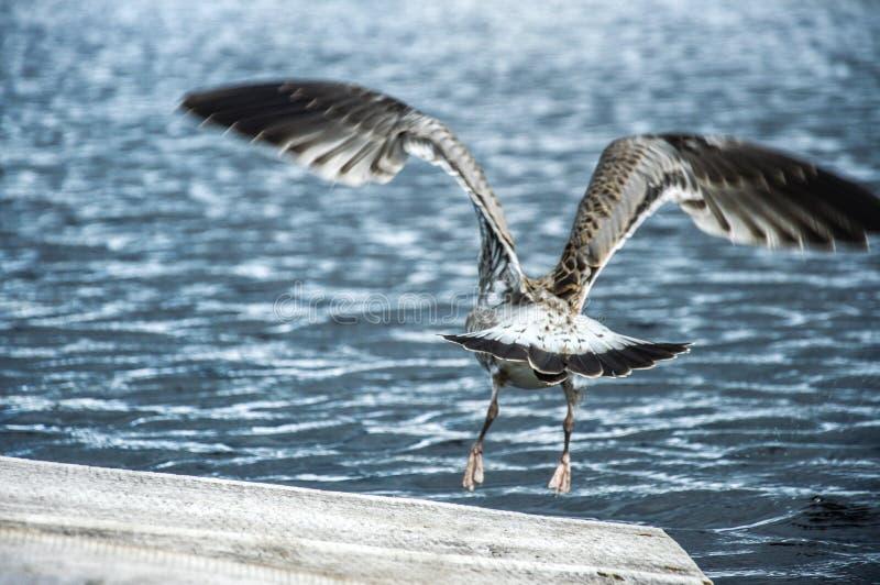 De vogel en het water stock afbeeldingen