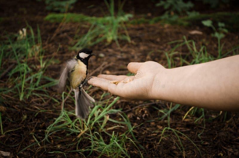 De vogel ontmoet mens royalty-vrije stock afbeeldingen
