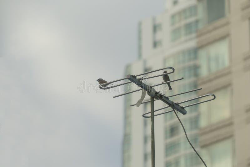 De vogel op de antenneachtergrond is een gebouw stock foto