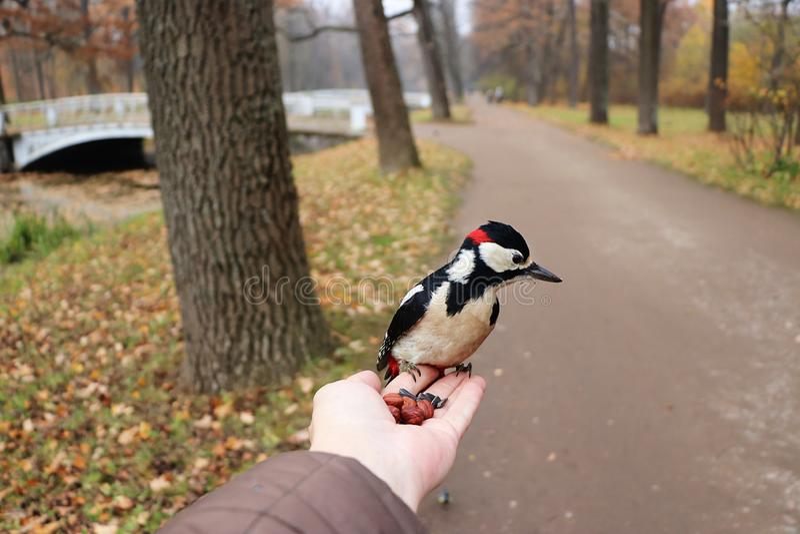 De vogel op de hand eet noten royalty-vrije stock foto's