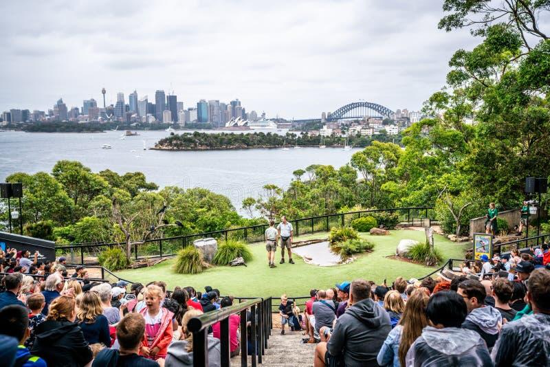 De vogel toont bij Taronga-dierentuin en toneelmening van de horizon van Sydney CBD op achtergrond in NSW Australië stock foto
