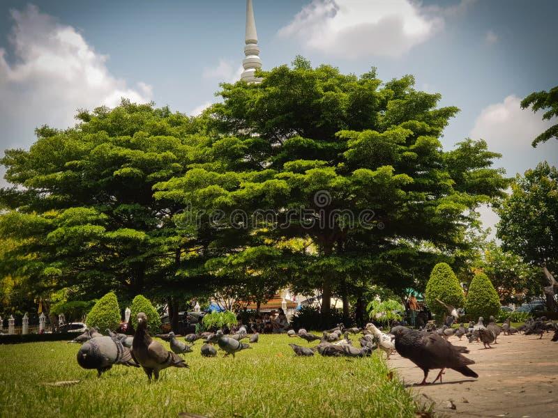 De vogel van bidt royalty-vrije stock afbeeldingen