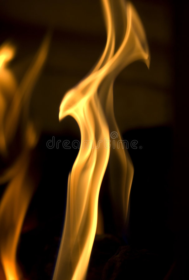 De Vogel van de brand stock afbeeldingen