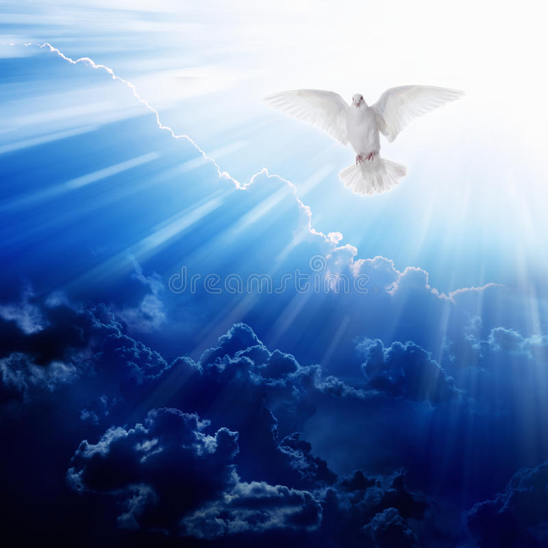 De Vogel van de Heilige Geest royalty-vrije stock foto's