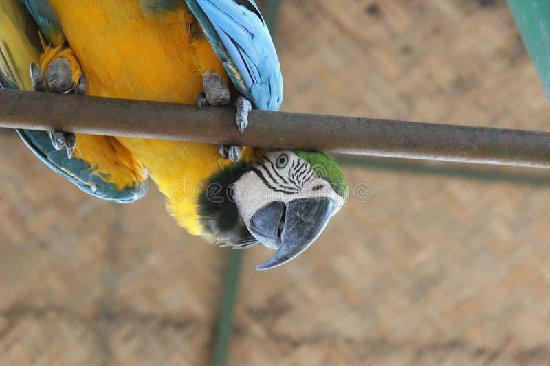 De vogel van de papegaai royalty-vrije stock foto's