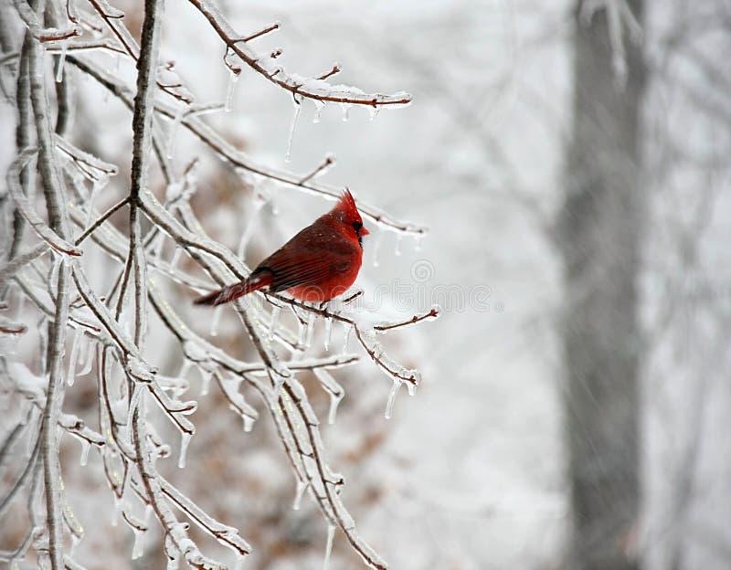 De vogel van de sneeuw stock afbeelding