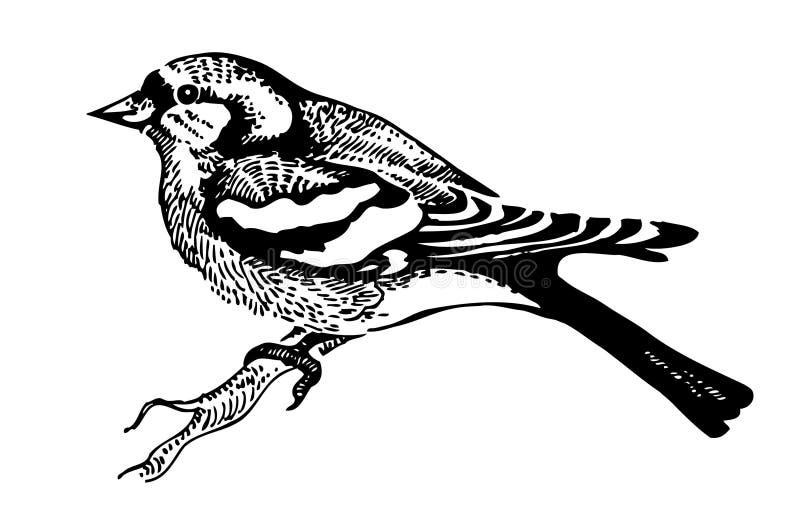 De vogel van de vink stock illustratie