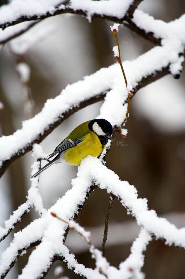 De vogel van de winter stock afbeeldingen