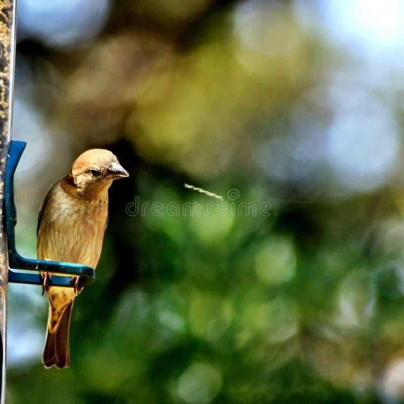 De Vogel van het spuwen royalty-vrije stock foto
