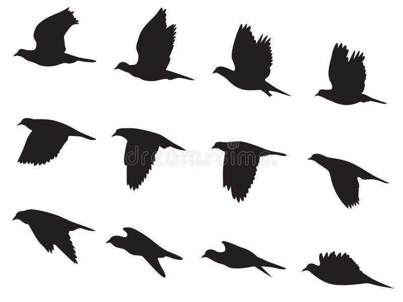 De vogel van silhouetduiven het vliegen motie vectorreeks stock illustratie