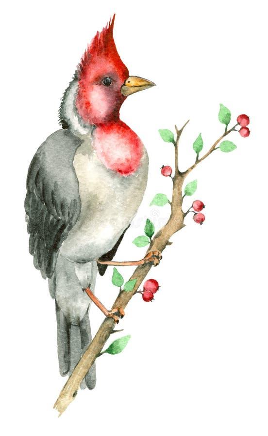 De vogel van de waterverfpapegaai stock illustratie