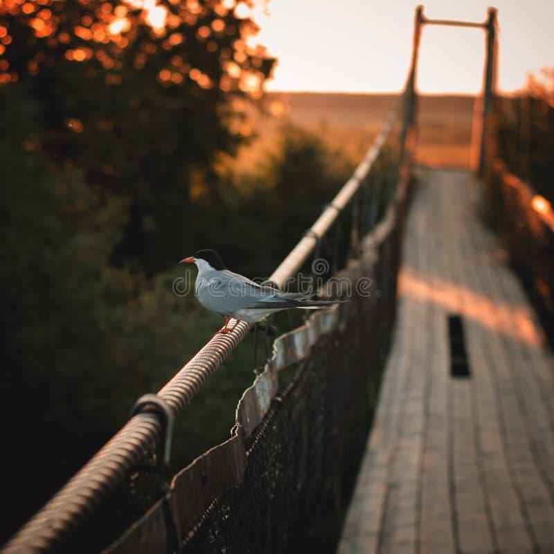 De vogel zit op het traliewerk van de brug royalty-vrije stock afbeeldingen
