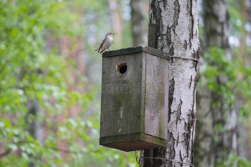 De vogel zit op het vogelhuis royalty-vrije stock afbeeldingen
