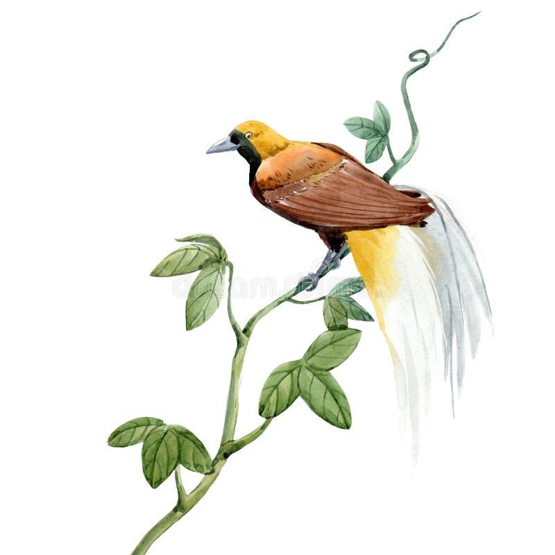 De vogelillustratie van het waterverf tropische paradijs royalty-vrije illustratie