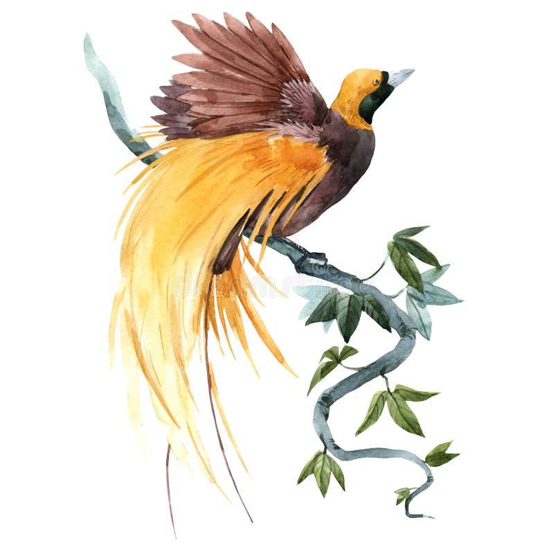 De vogelillustratie van het waterverf tropische paradijs vector illustratie