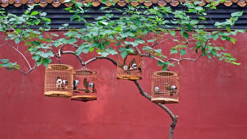 De vogelkooien met zangvogels hangen op een boom in een Chinees park royalty-vrije stock afbeeldingen