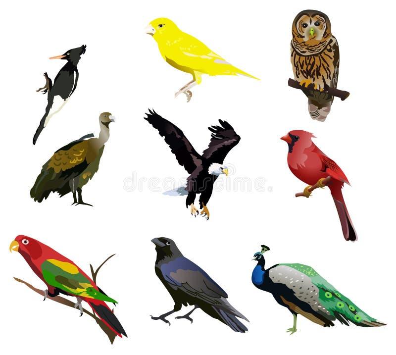 De vogels stock illustratie