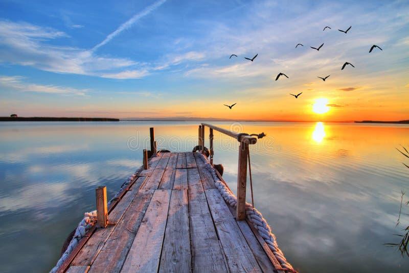 De vogels in het meer stock fotografie