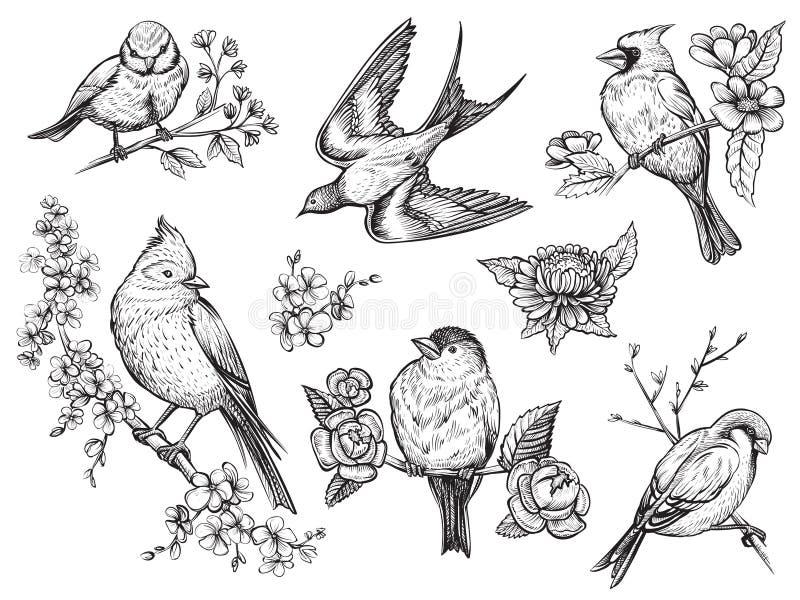 De vogels overhandigen getrokken illuatrations in uitstekende stijl met de bloemen van de de lentebloesem vector illustratie