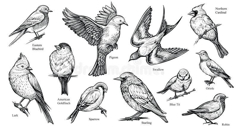 De vogels overhandigen getrokken vectorillustratie stock illustratie