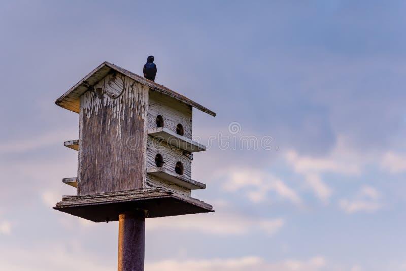 De vogels streken op houten vogelhuis met blauwe hemel en wolken op de achtergrond neer stock afbeelding