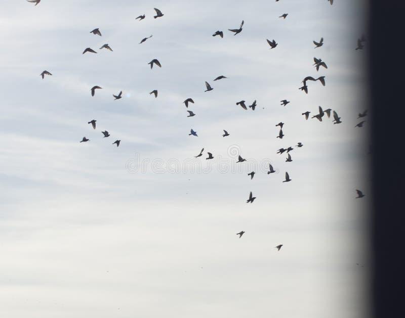 De vogels tijdens de vlucht stock afbeeldingen