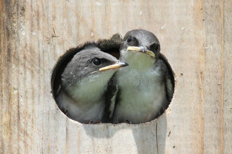 De Vogels van de baby op een Algemene Vergadering van de Vogel stock foto's