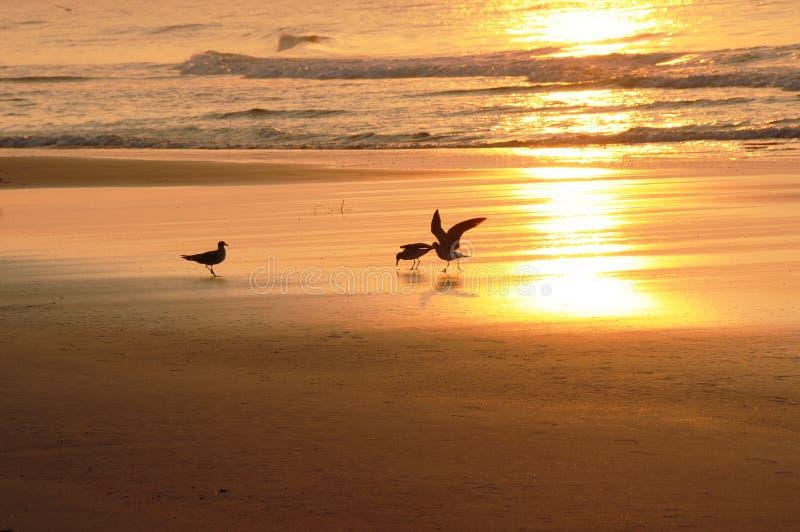De vogels van de ochtend stock foto's