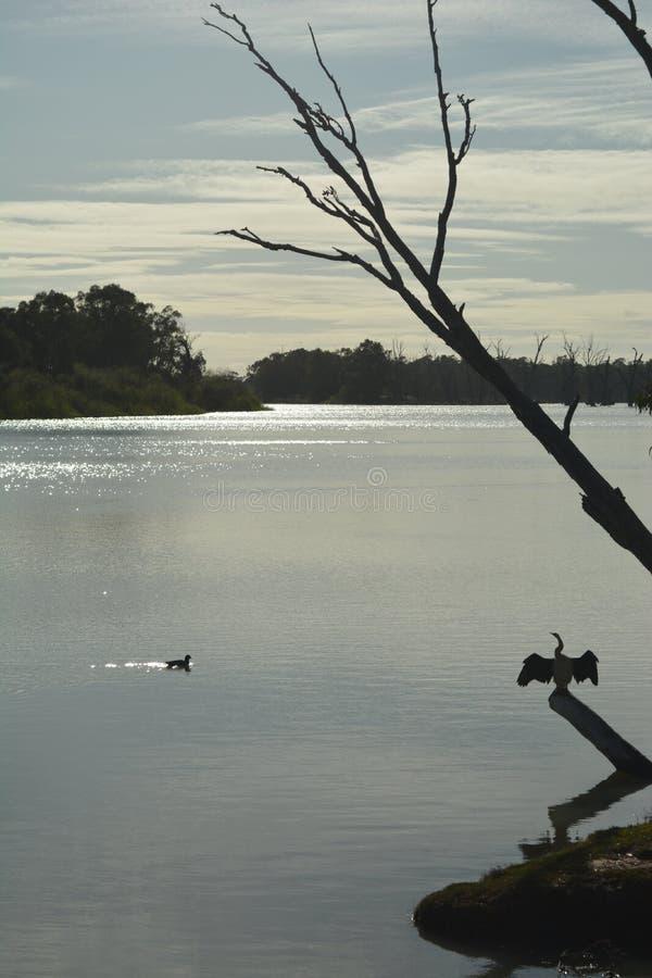 De vogels van de ochtendrivier stock afbeeldingen